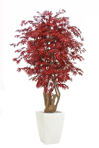 Maple Malabar 200 cm Burgundy